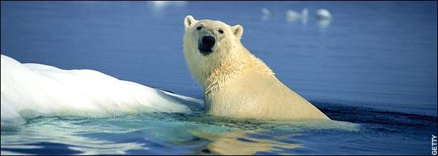 polarbearice.jpg